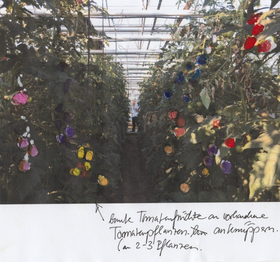http://jennyroesler.de/files/gimgs/th-34_34_gewaechshaus-bunte-tomaten.jpg